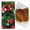 Natural Rose Hips Extract with 5% Vitamin C / 10% Polyphenols