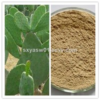 Natural Plant Extract San Pedro Cactus / Cactus Extract