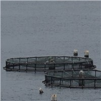 Fish Farming Cage, Fish Cage, Sea Cage