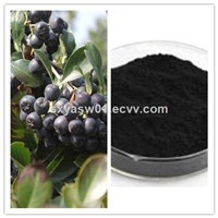 Natural Chokeberry Extract with Anthocyanins