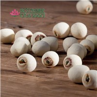 Dried Grinding Lotus Seed Nut Kernel with Core Plumele Lotus Extract Manufacture Wholesaler/Distributor Supplier