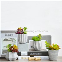Succulent Flower Pot Planter for Your Home