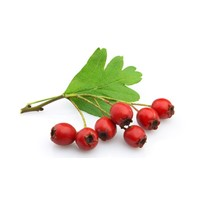 Natural Plant Extract Hawthorn Extract