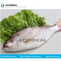 RED MULLET - CRIMSON - RED SNAPPER - FROZEN FISH SEAFOOD - FILLET - PORTION - CUT