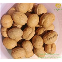 High Quality Xin2 Walnut Inshell