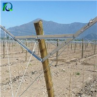 Table Grape Trellis Systems Open Gable Trellis