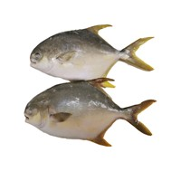 Gain Ocean Food Farm Raised Seafood Available Size Frozen Whole Golden Pompano Fish